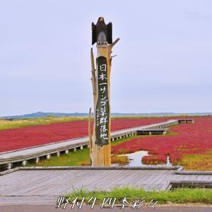能取湖サンゴ草の紅葉