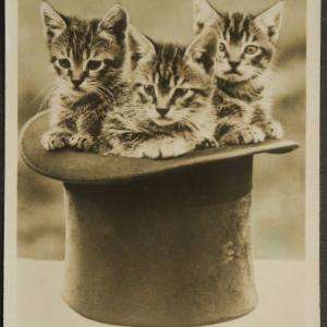イギリス アンティークポストカード ハットの中に3匹の仔猫たち