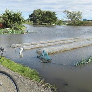 氾濫危険水位に到達し溢れんばかりの元荒川