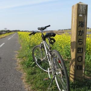 江戸川の菜の花絨毯/松伏町をブラブラ自転車散歩