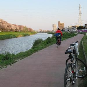 桜吹雪と春の咲く逆川緑道と元荒川堤桜並木