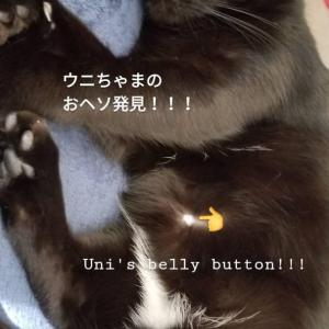 猫のおヘソ