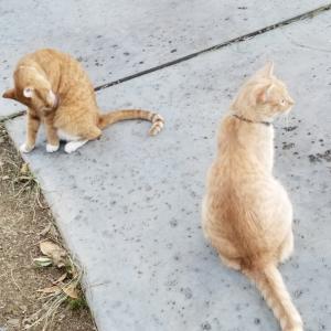 猫の舌の威力