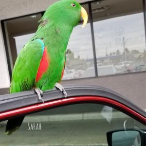 鳥がニャー