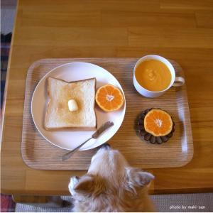 * 愛犬との朝ごはんに感謝です<(_ _)> *