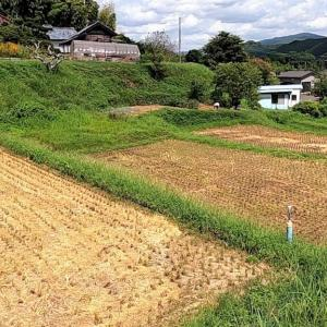 茨城県北2020年の初秋・・棚田は稲刈り