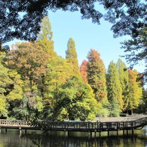 東京都立井の頭恩賜公園2020年の黄葉・・