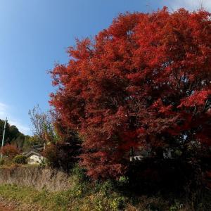 茨城県北2020年初冬・・山峰の風景