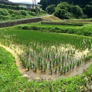 茨城県北2021年の小さな棚田・・梅雨前