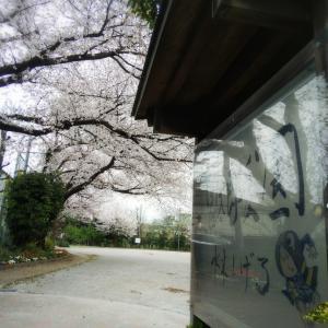 桜吹雪とクッキーちゃん(笑)