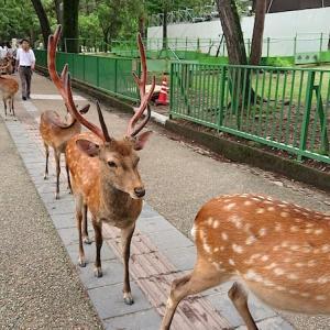 2019年夏 残り梅雨京都旅【おまけの鹿さん編】