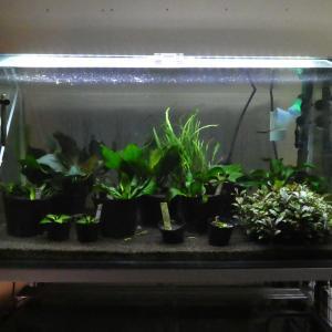 水槽用LED照明 あんまり変わんないかも 笑