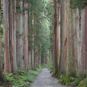 戸隠神社 樹齢400年の杉並木 ♡パワースポット(立山登山車中泊旅行 その6)