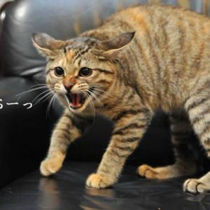 【日ハム7回戦(札幌)】5位固めの雰囲気になりそうな『GO TO 札幌キャンペーン』に。。。「打たねぇ獅子はただの猫だ」/監督も『いねぇーんだよ』ではないけど 『他にいますか?』