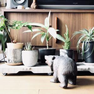 家の中で旅をする!動物の置物で楽しむアニマルインテリア