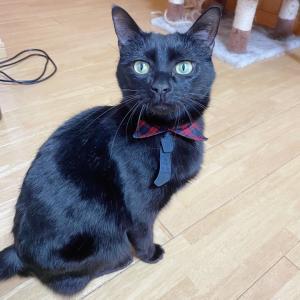 猫チュール大好きー!