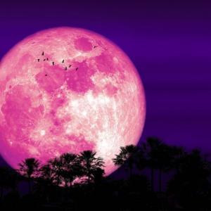 幕末の桜の花びらたち 第十二章「まっこじお龍、花魁美音の島原へ」後編  ╋マナのオリンピック話