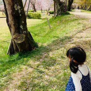 入園記念フォトは桜と一緒に。。。