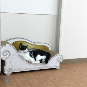 保護ネコカフェVELCATさんで、お猫様を満喫