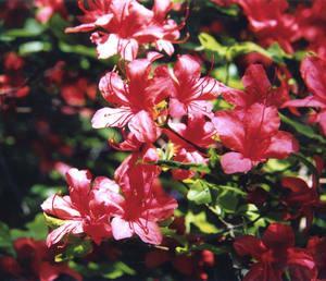 花を見つめる。主イエス・キリストの御名によって。アーメン。(ポエム)