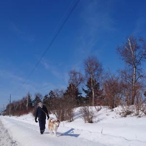 スポーツ種目はハスキー散歩♪