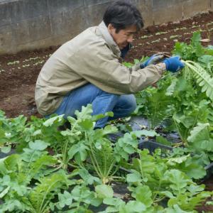 秋本番 作業も本番 目いっぱい 収穫も 目いっぱい