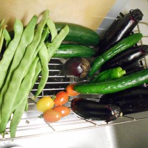 夏野菜の収穫量が増えてきました