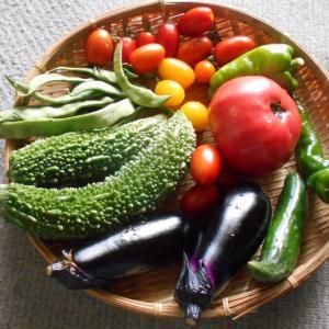夏の野菜の贈り物