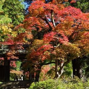 綾部安国寺の紅葉