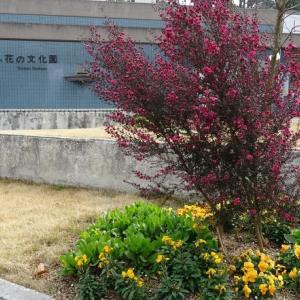 大阪府立花の文化園の花