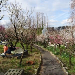 大阪府立花の文化園の梅園