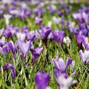 オランダの春の習慣!Voorjaarsschoonmaak(春の大掃除)について