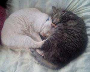 できるだけ長く、猫と暮らしていたい。