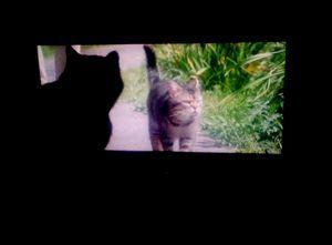 カンちゃんも映画を観る。