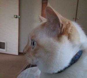猫が映画を観ている時は、そっとしておこう。