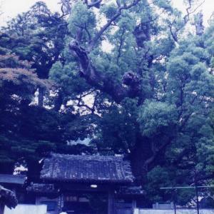 佐田岬から九州へ(1996年5月26日~6月1日)改訂版 その4