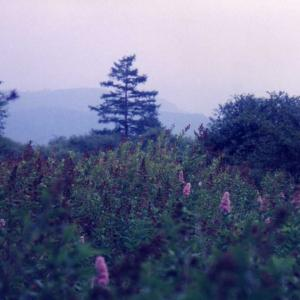 磐梯高原より日光の旅(1997年8月31日~9月5日)改訂版 その15