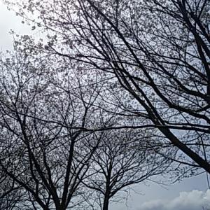 葉桜だったけど