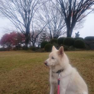 公園の冬支度。