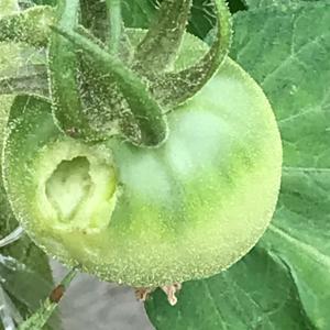 家庭菜園 害虫が増えた!