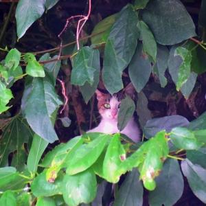 野母崎の猫