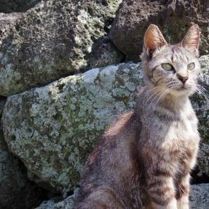 猫を求めて黄島へ。〈その17〉