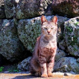 猫を求めて黄島へ。〈その16〉