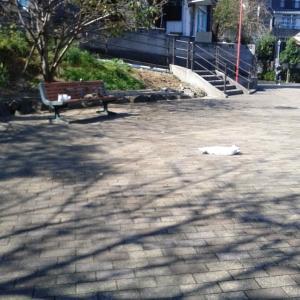 グラバー園と平和祈念公園の猫