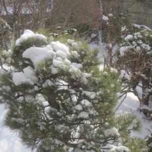 今朝は雪でした・・・1月19日