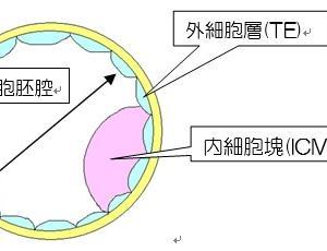 胚盤胞の評価方法