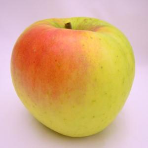 うさぎに食べさせたい甘~いりんご「ぐんま名月は」今が旬!