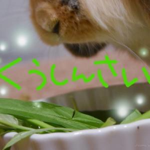 うさぎに与えて良い野菜【空心菜(くうしんさい)】