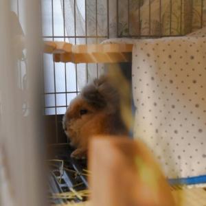 うさぎを湿度から守れ エアコン除湿稼働!