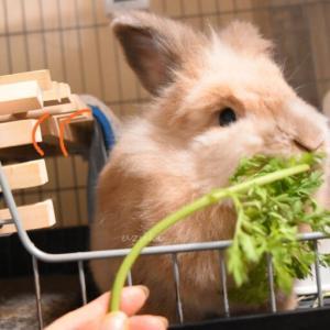 うさぎに本当に食べさせたいのは「固定種野菜」